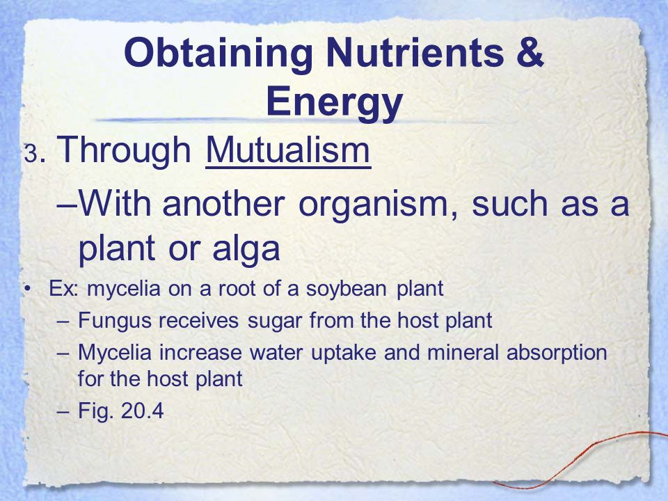 Obtaining Nutrients & Energy