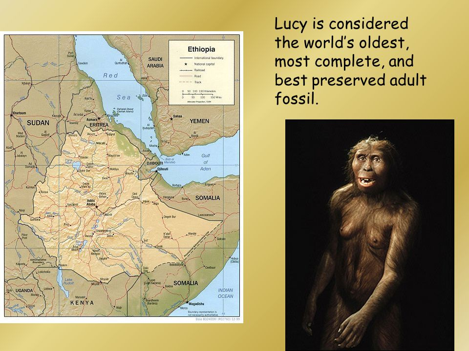 Lucy is considered the world's oldest, most complete, and best preserved adult fossil.