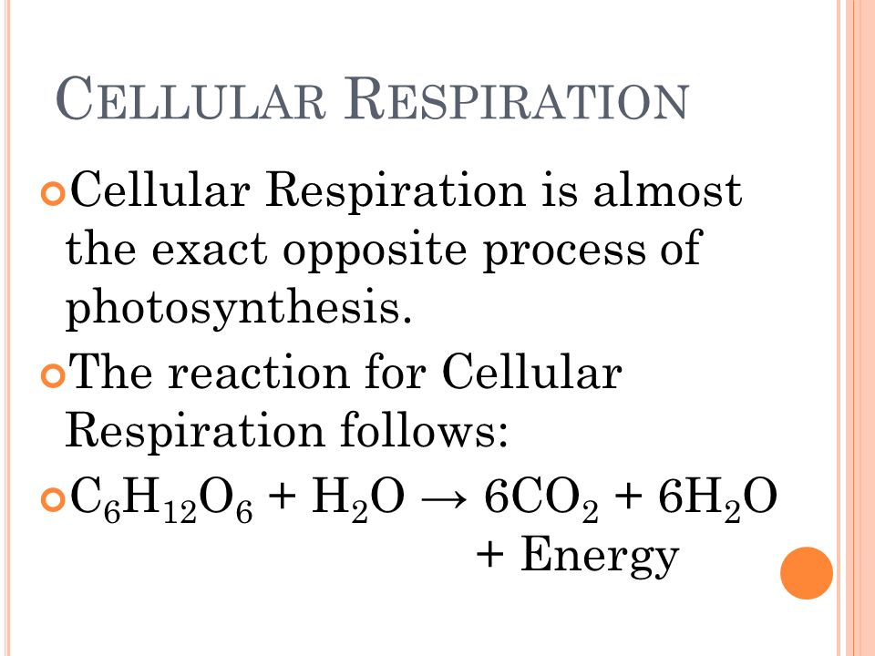 Cellular RespirationCellular Respiration is almost the exact opposite process of photosynthesis. The reaction for Cellular Respiration follows: