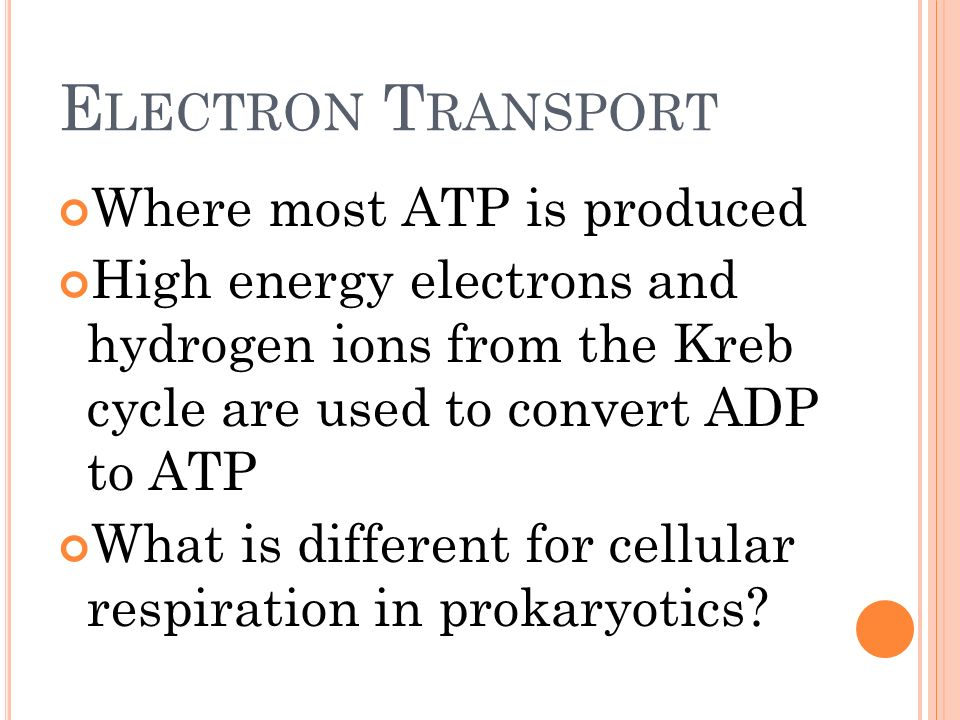 Electron Transport Where most ATP is produced