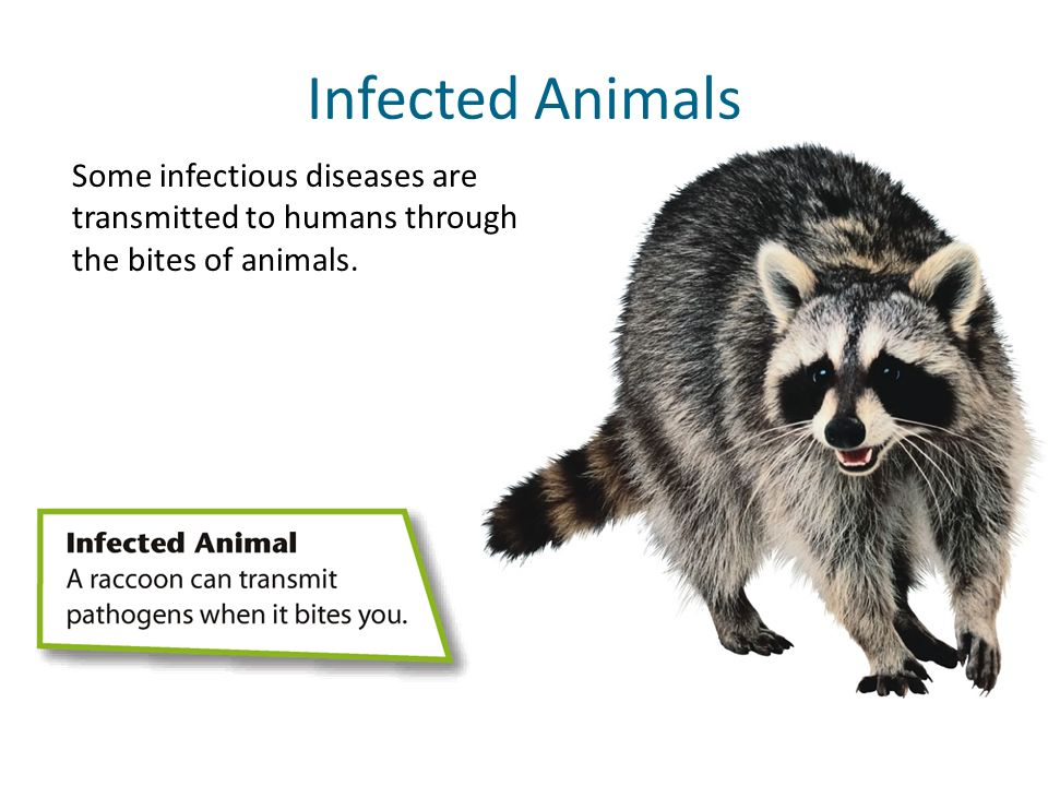 Infected Animals Some infectious diseases are transmitted to humans through the bites of animals.