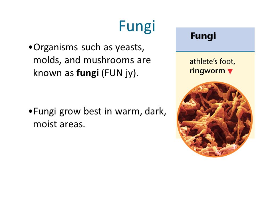 Fungi Organisms such as yeasts, molds, and mushrooms are known as fungi (FUN jy).