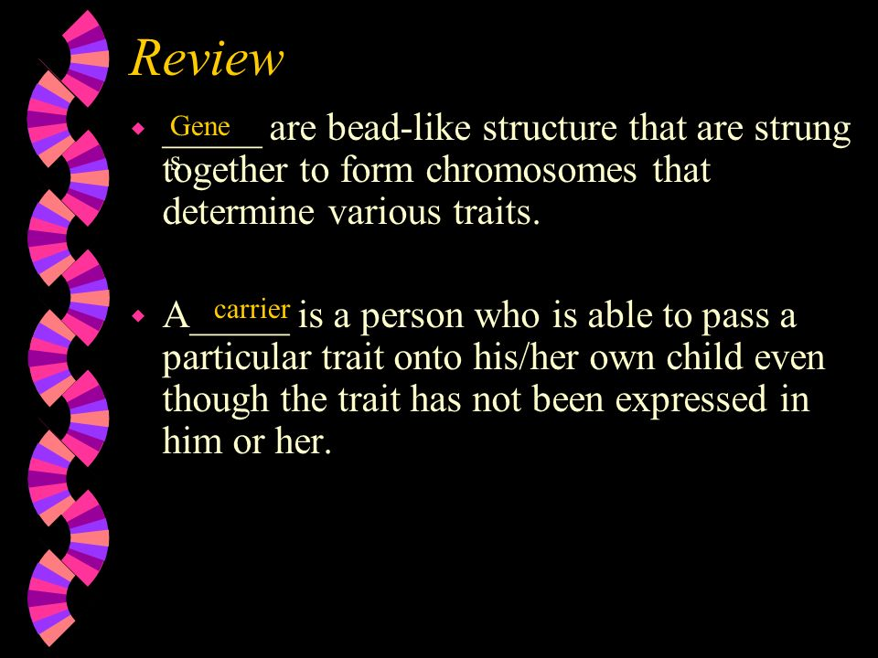 Review _____ are bead-like structure that are strung together to form chromosomes that determine various traits.