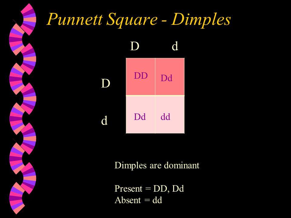 Punnett Square - Dimples