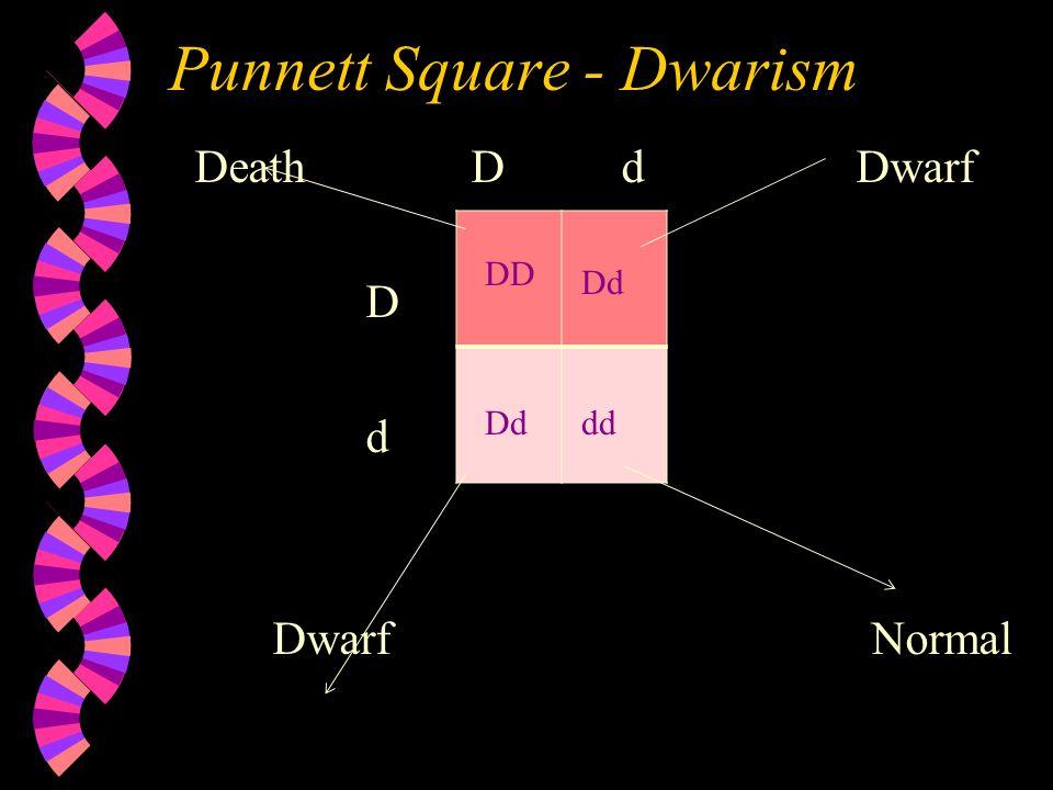 Punnett Square - Dwarism