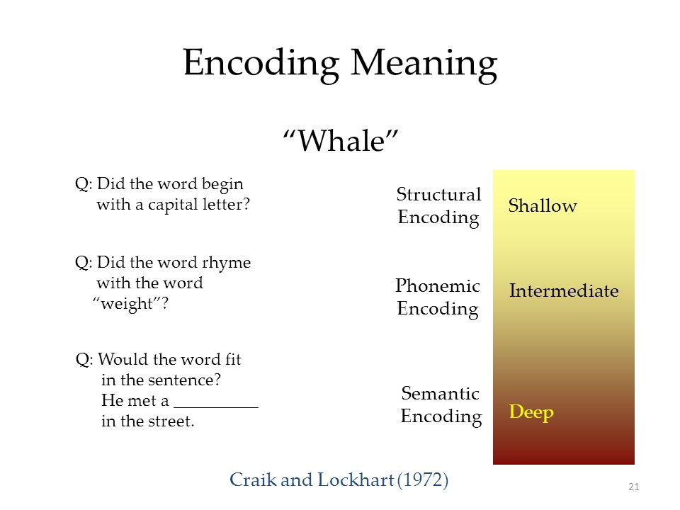 Encoding Meaning Whale Structural Encoding Shallow Phonemic Encoding