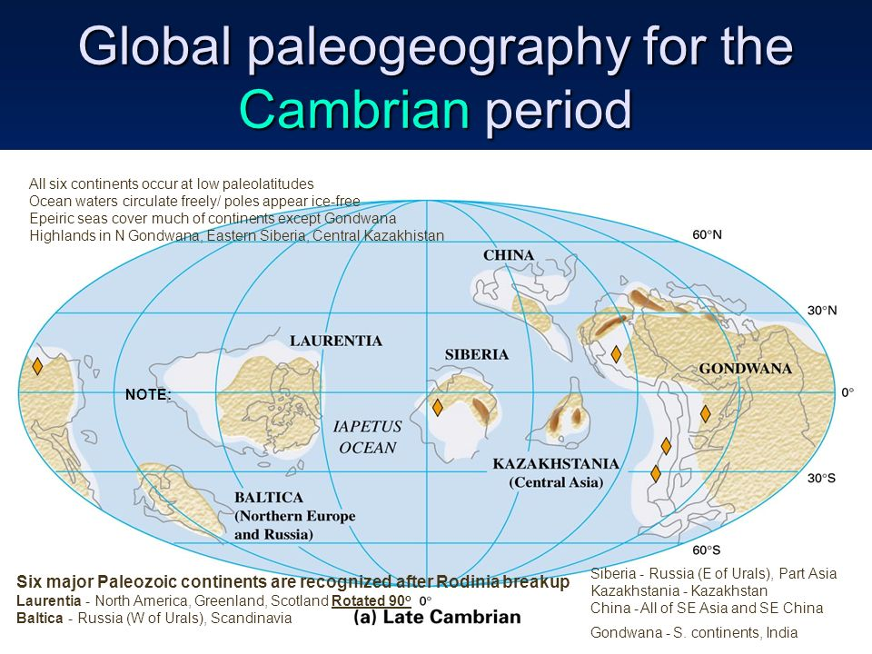 the cambrian period essay Cambrian explosion research papers look at the period in earth's prehistory when a number of animal phyla suddenly appeared in the fossil record.