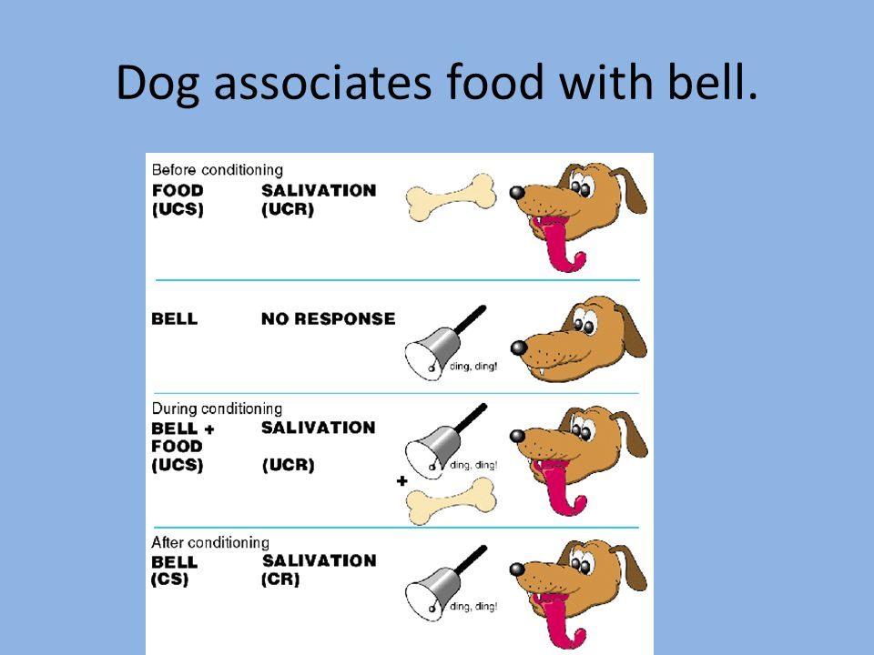 Dog associates food with bell.