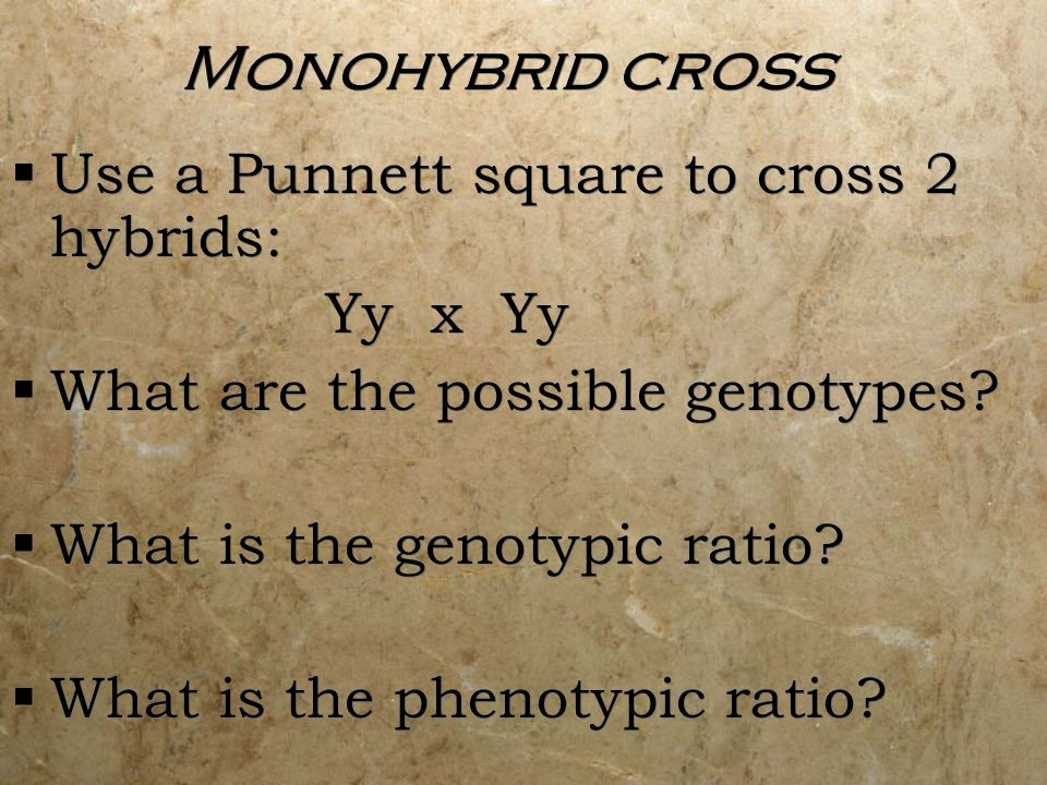 Monohybrid cross Use a Punnett square to cross 2 hybrids: Yy x Yy