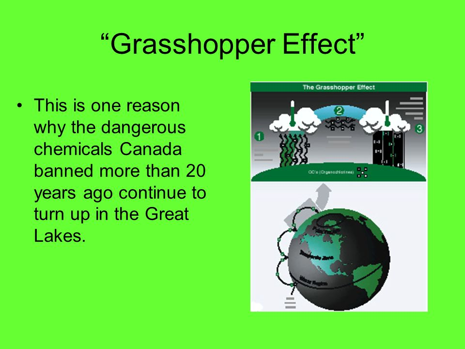 Grasshopper Effect This is one reason why the dangerous chemicals Canada banned more than 20 years ago continue to turn up in the Great Lakes.