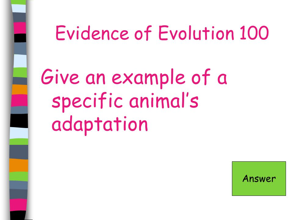 Give an example of a specific animal's adaptation