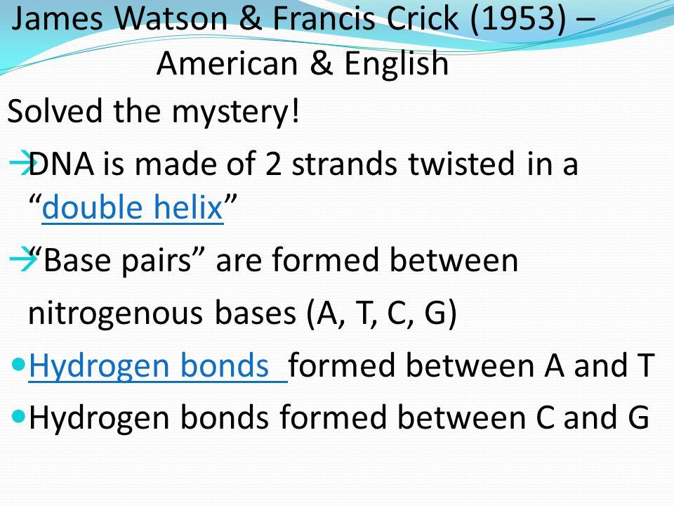 James Watson & Francis Crick (1953) – American & English