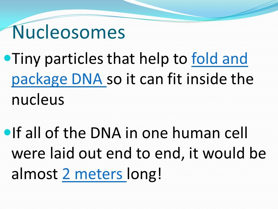 Nucleosomes Tiny particles that help to fold and package DNA so it can fit inside the nucleus.