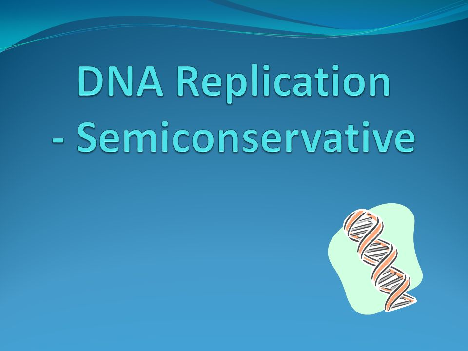 DNA Replication - Semiconservative