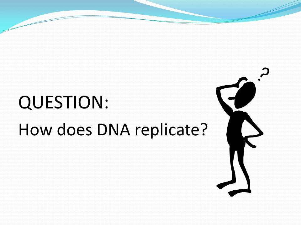 QUESTION: How does DNA replicate