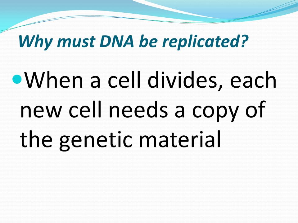Why must DNA be replicated