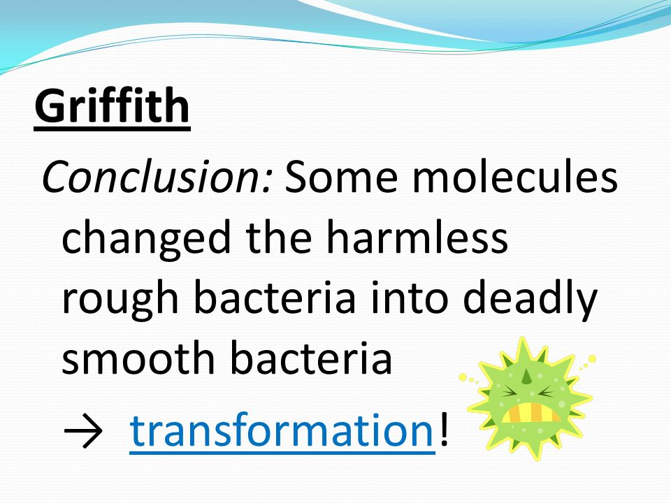 Griffith Conclusion: Some molecules changed the harmless rough bacteria into deadly smooth bacteria → transformation.