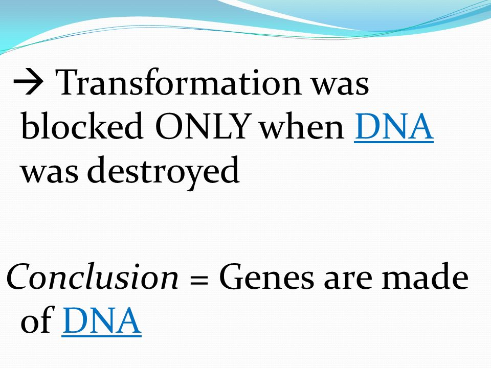 Conclusion = Genes are made of DNA