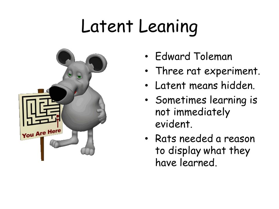 Latent Leaning Edward Toleman Three rat experiment.