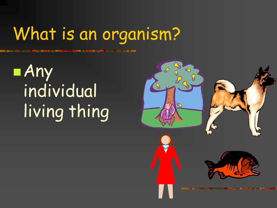 What is an organism Any individual living thing