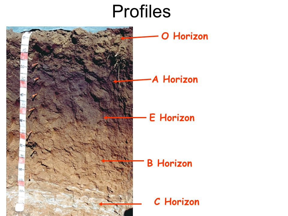 Profiles O Horizon A Horizon E Horizon B Horizon C Horizon