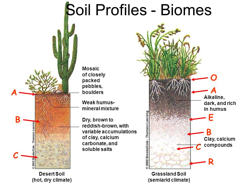 Soil Profiles - Biomes O A A E B B C C R Mosaic of closely packed
