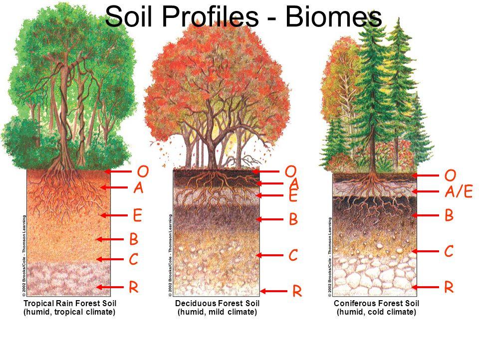 Soil Profiles - Biomes O O O A A A/E E E B B B C C C R R R