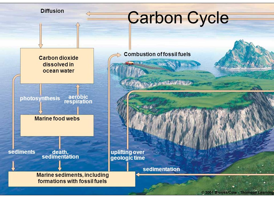Carbon Cycle Diffusion Combustion of fossil fuels Carbon dioxide