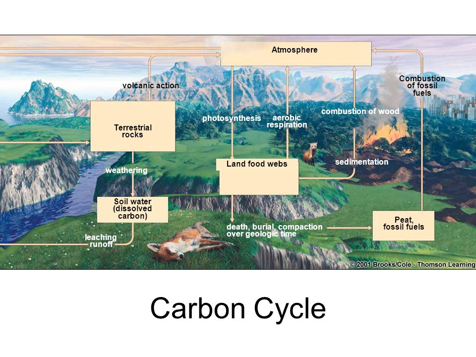 Carbon Cycle Atmosphere Combustion of fossil fuels volcanic action