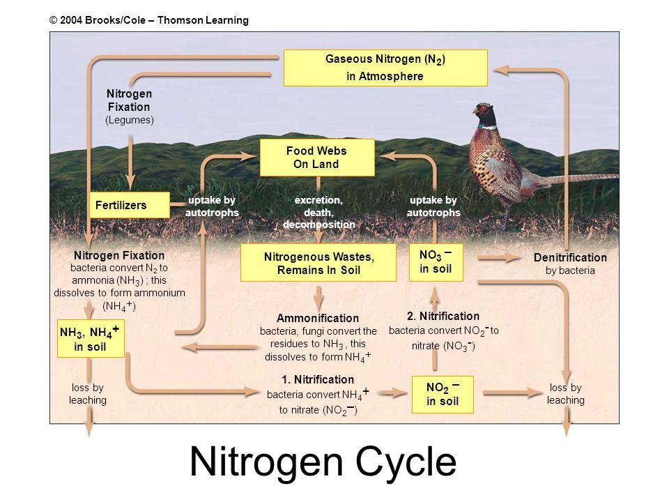 Nitrogen Cycle Gaseous Nitrogen (N2) in Atmosphere Nitrogen Fixation
