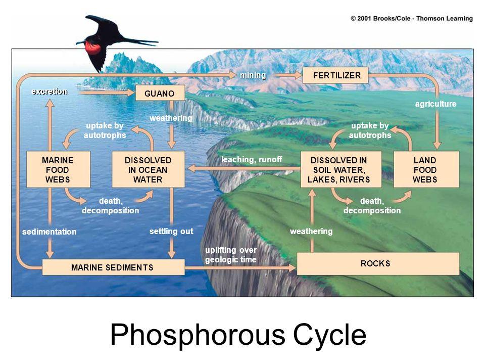 Phosphorous Cycle mining FERTILIZER excretion GUANO agriculture