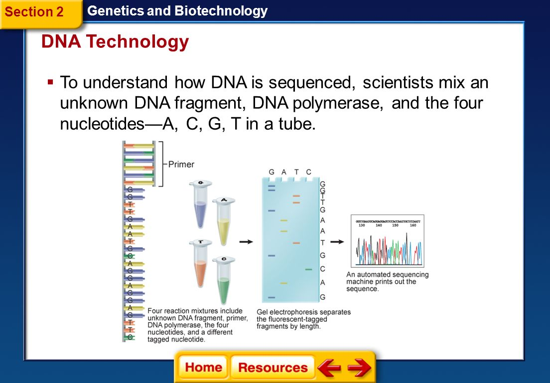 Section 2 Genetics and Biotechnology. DNA Technology.