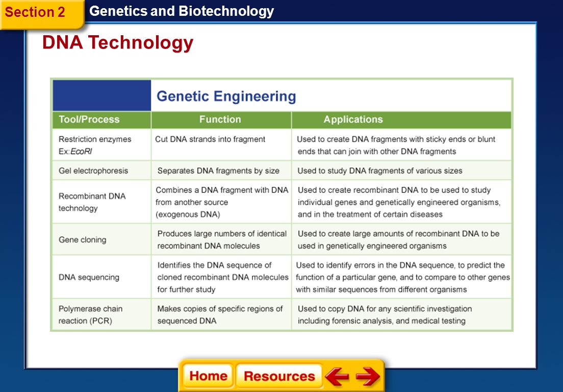 Section 2 Genetics and Biotechnology DNA Technology