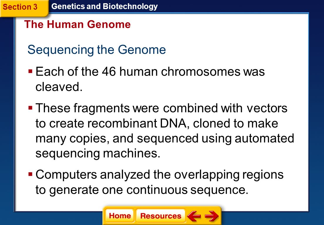 Each of the 46 human chromosomes was cleaved.