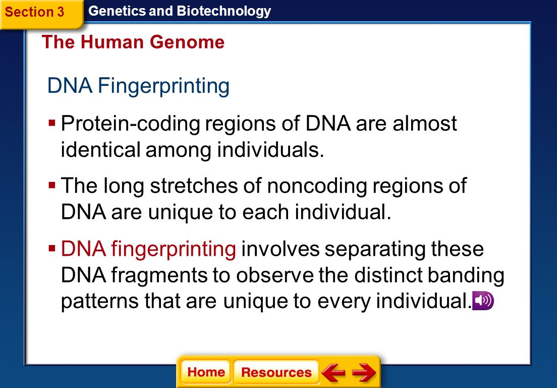 Protein-coding regions of DNA are almost identical among individuals.