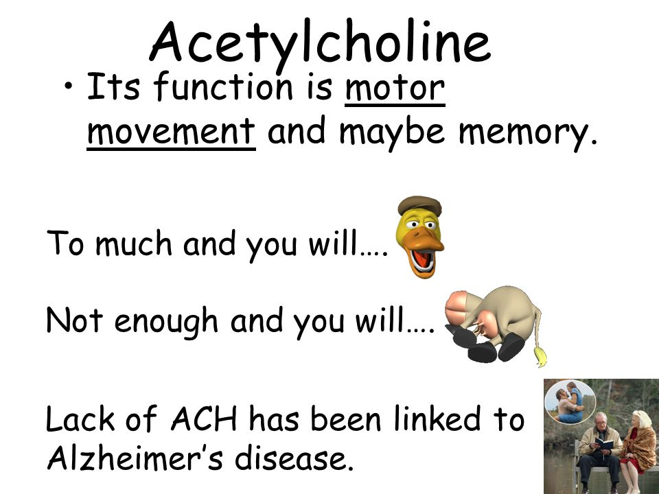 Acetylcholine Its function is motor movement and maybe memory.