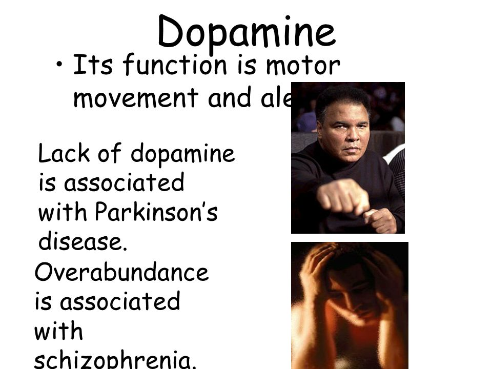 Dopamine Its function is motor movement and alertness.