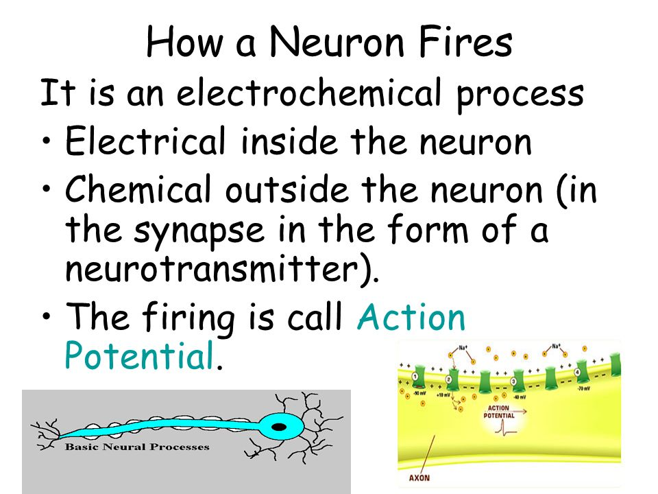 How a Neuron Fires It is an electrochemical process