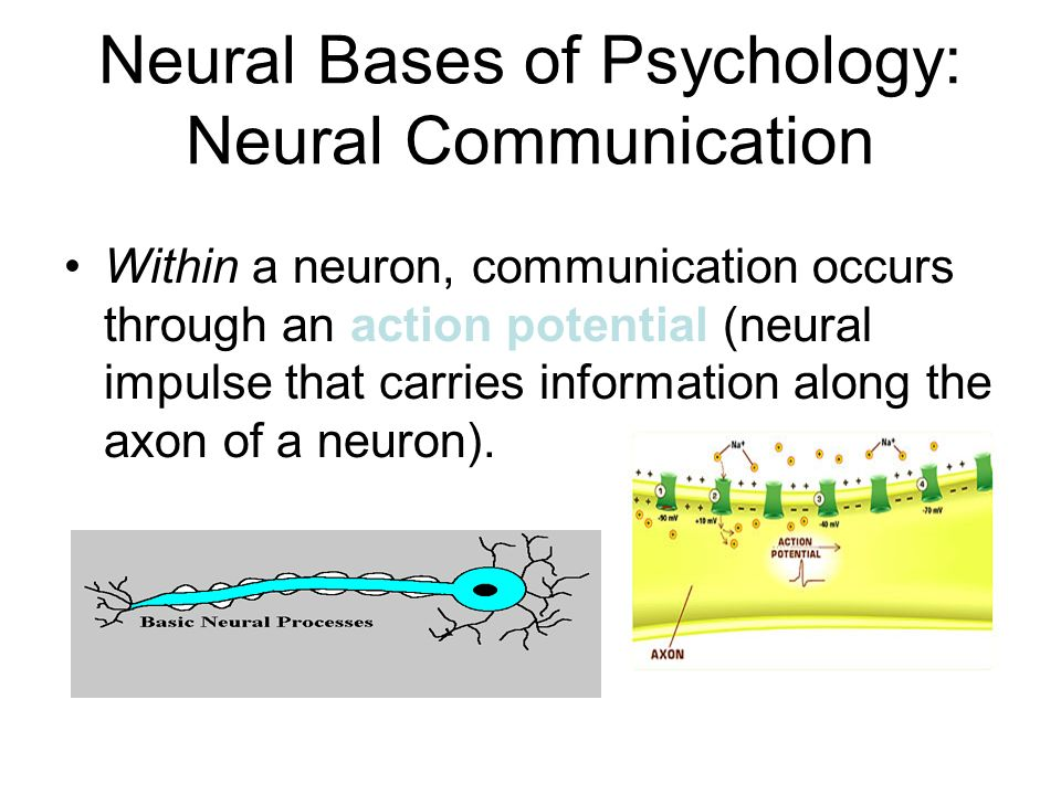 Neural Bases of Psychology: Neural Communication