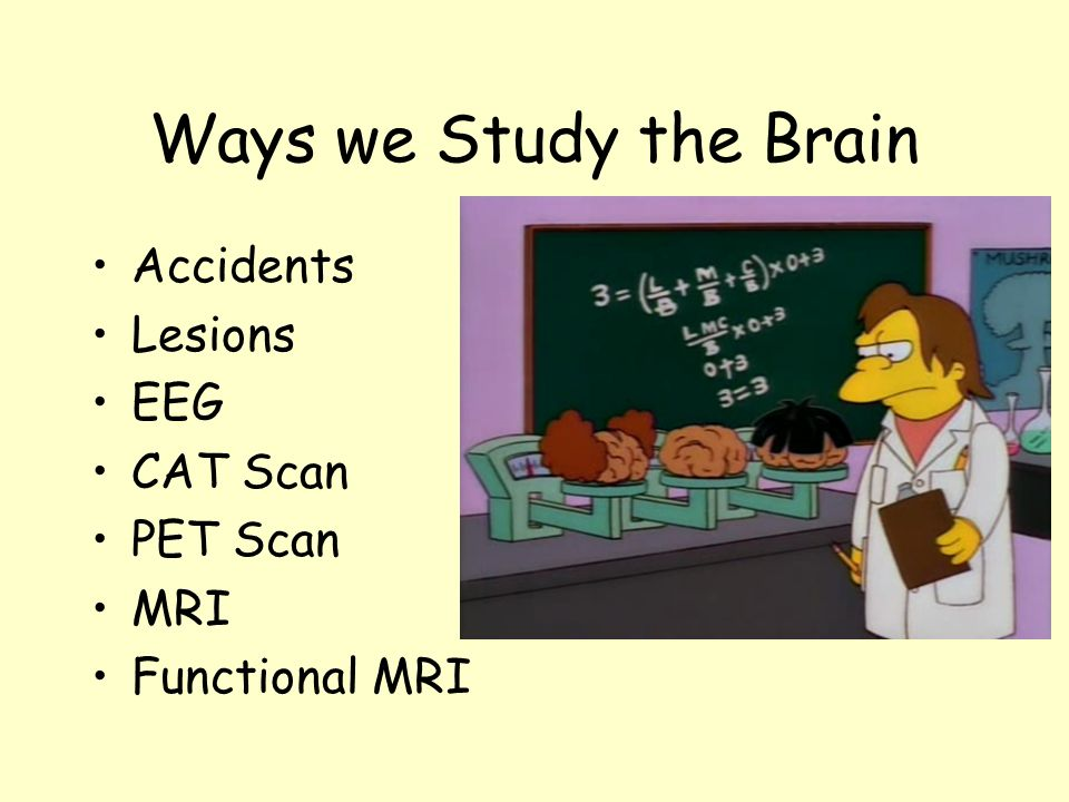Ways we Study the Brain Accidents Lesions EEG CAT Scan PET Scan MRI
