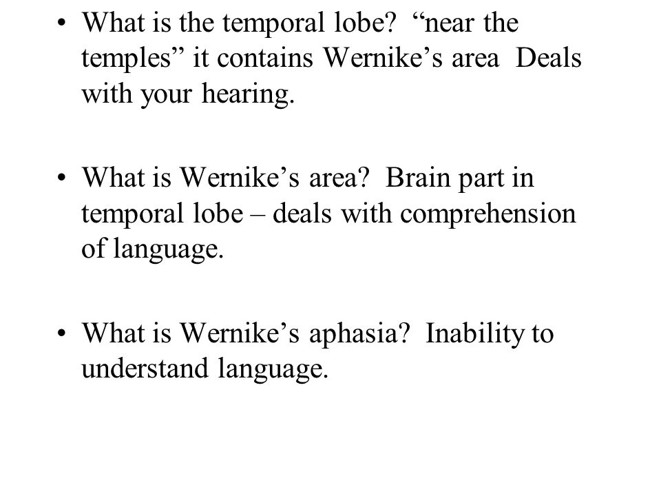 What is the temporal lobe