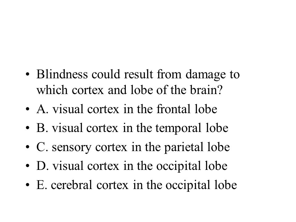 Blindness could result from damage to which cortex and lobe of the brain