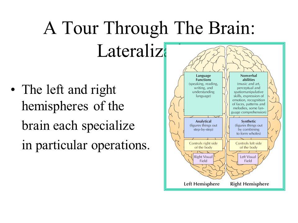 A Tour Through The Brain: Lateralization