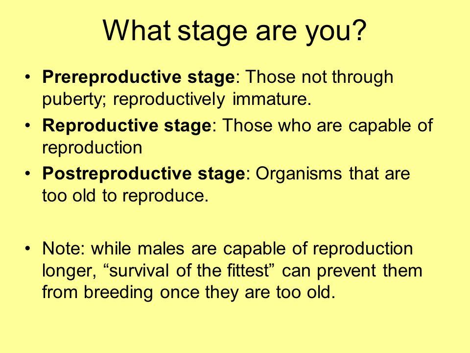 What stage are you Prereproductive stage: Those not through puberty; reproductively immature.