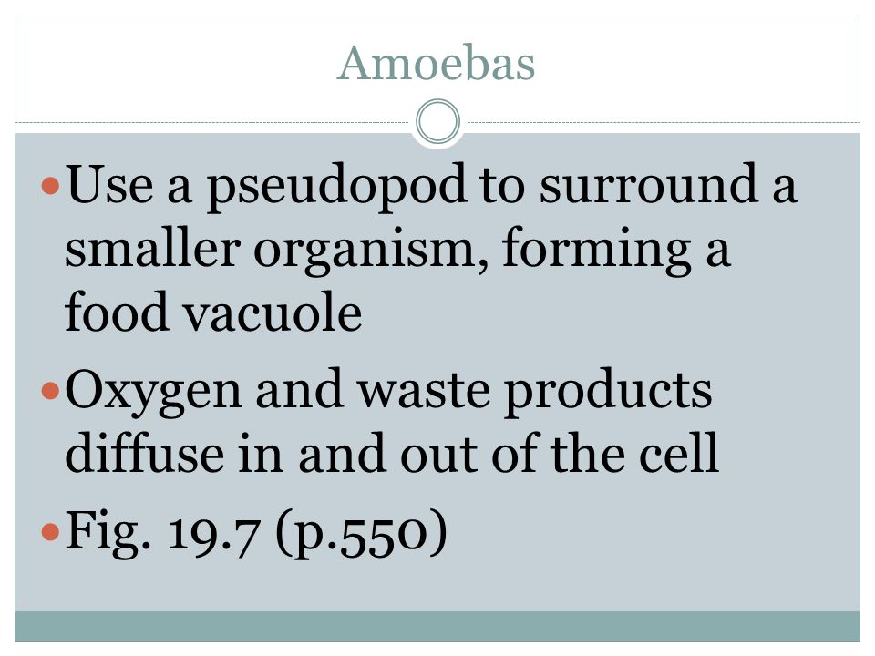 Use a pseudopod to surround a smaller organism, forming a food vacuole
