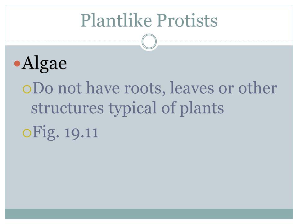 Plantlike Protists Algae