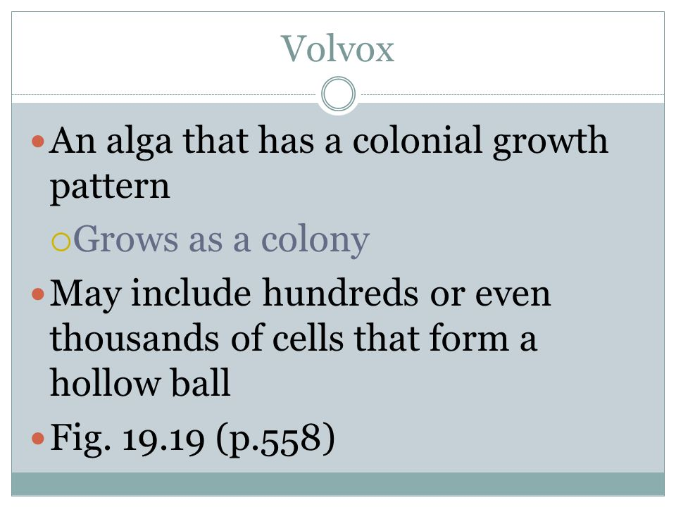 Volvox An alga that has a colonial growth pattern. Grows as a colony. May include hundreds or even thousands of cells that form a hollow ball.