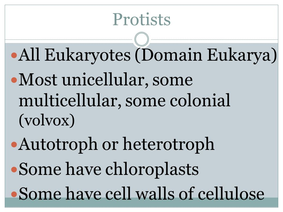 Protists All Eukaryotes (Domain Eukarya) Most unicellular, some multicellular, some colonial (volvox)