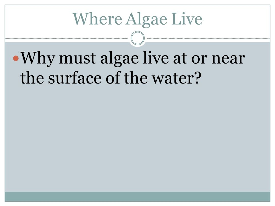 Where Algae Live Why must algae live at or near the surface of the water
