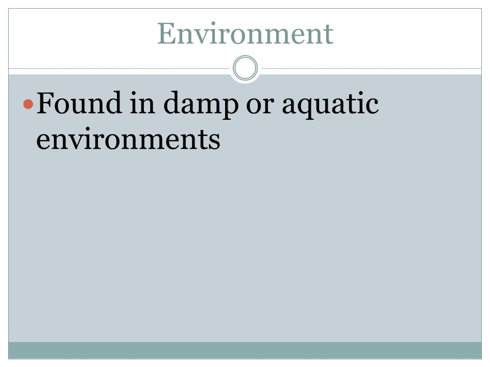 Environment Found in damp or aquatic environments
